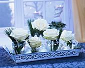 weiße Rosen mit Kieferzweigen in Gläsern
