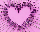 Lavender flowers forming a heart on a pink background
