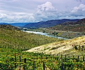 Vineyard of Quinta do Vale do Meao, Vila Nova de Foz Coa, Portugal