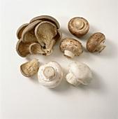 Oyster mushrooms, button mushrooms & chestnut mushrooms