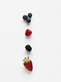 Heidelbeeren, Himbeere, Brombeere und Erdbeere