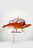 Cooked lobster on wall-mounted match holder