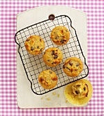Apple, honey and raisin muffins on cake rack
