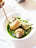 Whelks in herb sauce