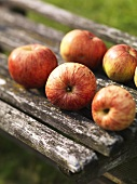 Fresh apples on wooden bench