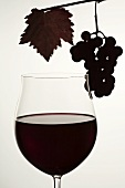 Glass of red wine and red grapes, backlit