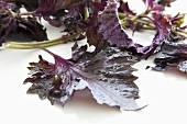 Red shiso leaves (Perilla)