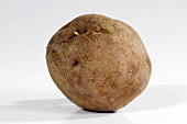 A potato (variety 'Edzell Blue')