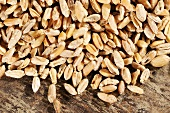 Grains of wheat on wooden background