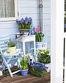 Various spring flowers in pots on a balcony