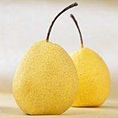 Two nashi pears (Pyrus pyrifolia)
