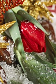Red tulip, variety: Brilliant Star (Christmas decoration)