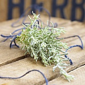 Curry plant (Helichrysum italicum)