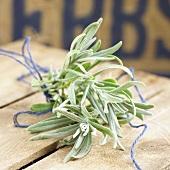 Lavender (Lavandula angustifolia)
