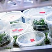 Pflanzen in Gefässen mit Flüssigkeit zur Beobachtung