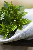 Fresh nettle tips on linen cloth