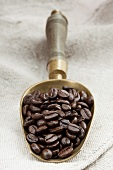 Roasted organic coffee beans in metal scoop