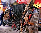 Dray horse at Oktoberfest