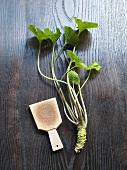 Wasabi root and sharkskin wasabi grater