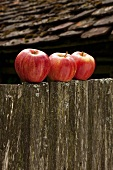 Three red apples on old wooden fence