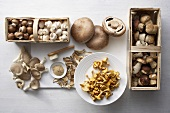 Still life with various edible mushrooms