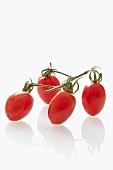 Plum tomatoes on the vine