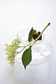 Carafe of water with elderflowers
