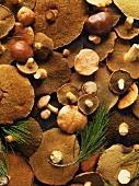 Fresh Slippery Jack mushrooms (full-frame)
