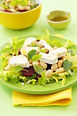 Salad leaves with beetroot, white beans and goat's cheese