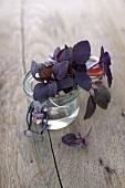 Purple basil in a preserving jar of water