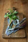 A bouquet of herbs and kitchen knives on a wooden board