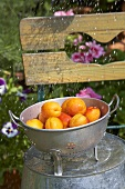 Sprinkling water over apricots in colander