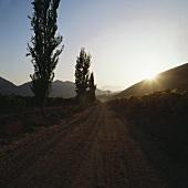 A road through the Santa Rita Estate, Maipo Valley, Chile