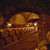 Wine cellar of Santa Rita Estate, Maipo Valley, Chile