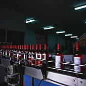Labelling wine bottles, Bodega Covinca, Longares, Spain