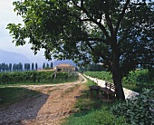 The Endrizzi Wine Estate, Trentino, Italy
