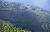 Vineyards near Mesão Frio, Vila Real, Douro, Portugal