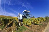 Mechanised grape picking with a grape harvester