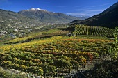 Aymavilles wine-growing area, Aosta Valley, Italy