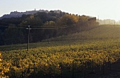 Wine-growing area, Asti, Piedmont, Italy