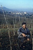 At work in the vineyard, Barolo, Piedmont, Italy