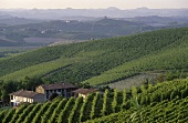 The Barolo wine-growing area, Piedmont, Italy