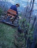 Tilling the soil, Elio Altare, La Morra, Piedmont, Italy