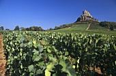Der Felsen von Solutre, Pouilly-Fuisse im Maconnais, Burgund
