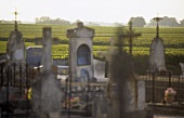 A cemetery next to a vineyard, St. Julien, Medoc, France