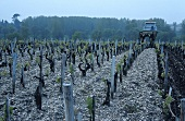 Tilling the soil, Pauillac, Medoc, France