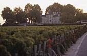 Vineyard of Chateau Pichon Longueville Comtesse de Lalande