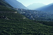 The wine village of Bianzone, Valtellina, Lombardy, Italy