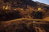 DOC 'Paradiso' vineyard site, Valtellina, Lombardy, Italy