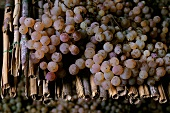 Malvasia grapes on straw mats for Vin Santo,  Tuscany